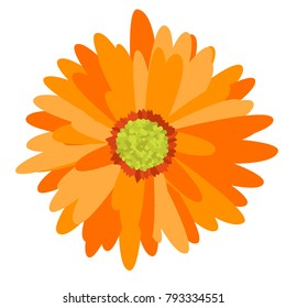 Gerbera Daisy Isolated. Vector Flower for Tablecloth, Paper, Tile. Vector illustration. Beautiful Gerbera. Floral Background. Vector Illustration. Floral. Gerbera Daisy  Isolated for the Pattern.