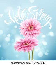 Gerbera Flower Background and Hello Spring Lettering. Vector Illustration EPS10