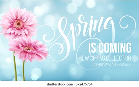 Gerbera Flower Background and Spring is coming Lettering. Vector Illustration EPS10