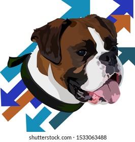 German boxer dog head vector