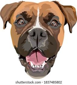 German boxer vector illustration. Portrait