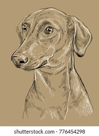 German Pinscher vector hand drawing black and white illustration isolated on beige background