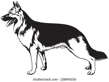 German Shepherd dog breed vector illustration from the dog show sign symbol set