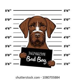 German shorthaired pointer dog criminal. Police banner. Arrest photo. Police placard, Police mugshot, lineup. Police department banner. Dog offender. Vector illustration