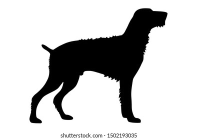 german wirehaired pointer vector silhouette