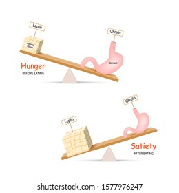 Ghrelin and Leptin. Human hormones before and after eating. Balance hormones that regulate Hunger and Satiety. Adipose tissue and stomach