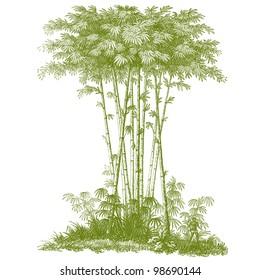 """Giant Bambou - vintage engraved illustration - """"La mosaique """" edited by A.Bourdilliat  1875 - Paris"""