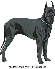 Giant dog vector. Great Dane Illustration