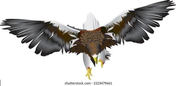 Giant Eagle vector - Drawing of a giant eagle flying