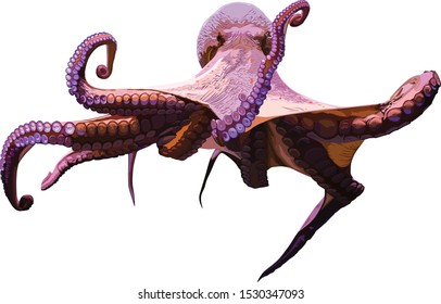 giant octopus on a white background