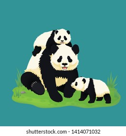Giant panda family. Smiling adult panda with two baby pandas sitting on the grass. Chinese bears. Mother or father and children. Rare, vulnerable species.