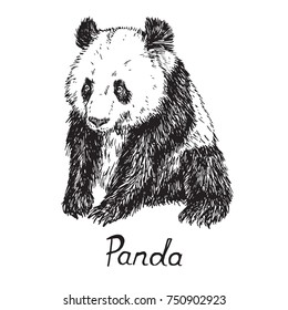 Giant panda sitting, hand drawn doodle sketch with inscription, vector illustration