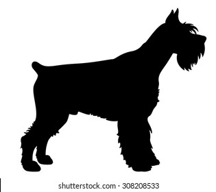 Giant Schnauzer purebred dog standing in side view - vector silhouette isolated