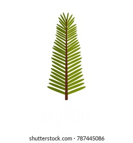 Giant sequoia tree icon. Flat illustration of giant sequoia tree vector icon isolated on white background