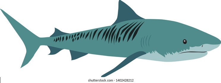 Giant tiger shark vector - Illustration giant tiger shark