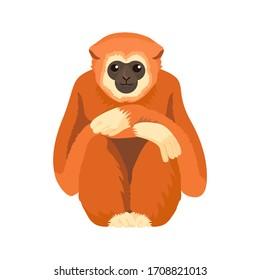 Gibbon primate mammal. Monkey in wildlife. Vector
