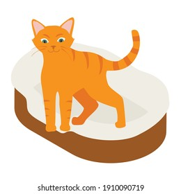 Ginger cat in his soft cozy bed cushion isolated on white background. Isometric view. Vector