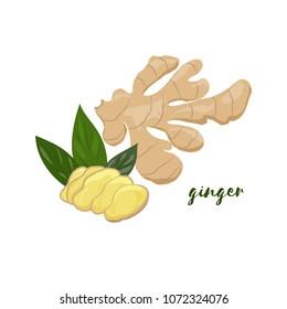 Ginger. Flat design. Vector illustration.