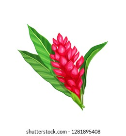 Ginger flower, tropical flower. Cartoon style vector illustration