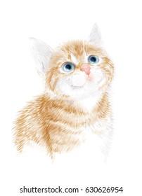 Ginger fluffy kitten. Portrait oh the cat. House pet.