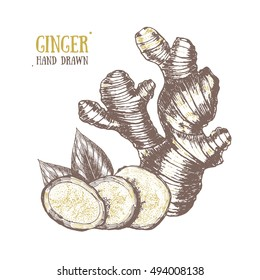 Ginger Hand Draw Sketch. Slices, Root and Ginger's Leaves. Herbal Spice. Three fresh gingers and pieces. Vector illustration for menu design