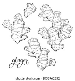 Ginger, isolated vector elements on a white background. Contour drawing, sketch.