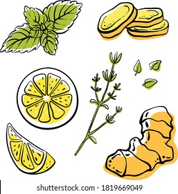 Ginger, lemon, mint, thyme. Colorful sketch collection of herbs and spices isolated on white background. Doodle hand drawn healthy food icons. Vector illustration