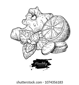 Ginger, lemon and mint vector drawing. Root, hearb leaf and fruit slice sketch. Engraved illustration with tea or lemonade ingredient, alternative medicine, flu treatment Label, icon, packaging design