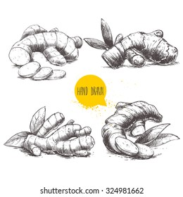 Ginger root set. White background with isolated hand drawn sketch ginger root. Herbs and spices vector illustration.