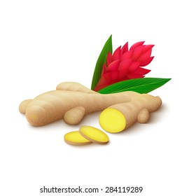Ginger root with slices, flower and leaves isolated on white background. Realistic vector illustration.