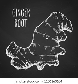 Ginger root in white isolated over black textured background. Hand drawn sketch herbs and spices vector illustration.