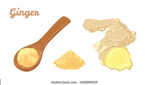 Ginger set. Ginger root and powder in wooden spoon  isolated on white background. Vector illustration of spicy spice seasoning in cartoon flat style.