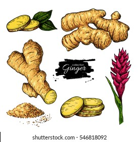 Ginger set. Vector hand drawn root, sliced pieces, powder and flower. Artistic style colorful flavor illustration. Herbal spice. Detox food ingredient.