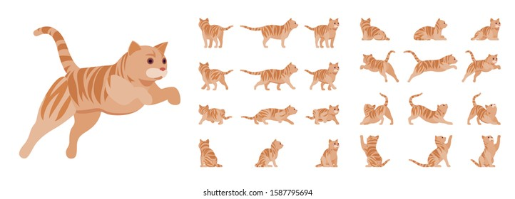 Ginger Tabby Cat set. Active healthy kitten with orange, red, and yellow-colored fur, cute funny pet. Vector flat style cartoon illustration isolated on white background, different views and poses