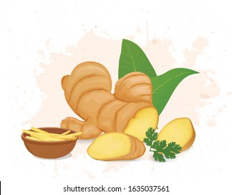 ginger vector illustration with ginger leaves and ginger pieces