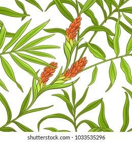 ginger vector pattern