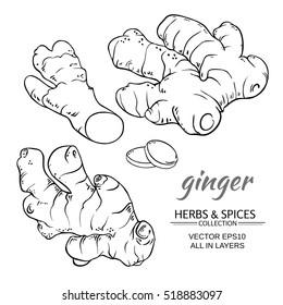 ginger vector set