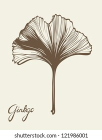Ginkgo Biloba beautiful leaf, vector