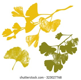 Ginkgo Biloba branches vector silhouettes with leaf vein texture isolated