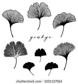 Ginkgo biloba leaf set. Vector black and white isolated realistic objects.  Botanical illustration