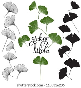 Ginkgo biloba leaves isolated on white background.  Hand drawn vector illustration, sketch. Elements for design.