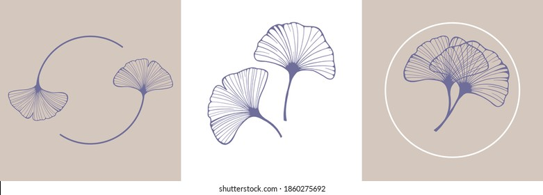 Ginkgo biloba leaves. Set of ginkgo leaf by hand drawing on white backgrounds. Elements for logo design. Vector illustration in a minimal linear style.
