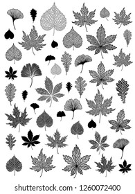 Ginkgo biloba, oak, linden, chestnut leaf set.  Vector black and white isolated realistic and silhouette objects. Botanical illustration