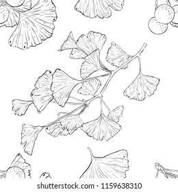 Ginkgo biloba plant seamless pattern brunch leaves hand drawn line vector health