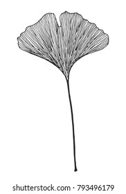 Ginkgo leaf vector black on white background
