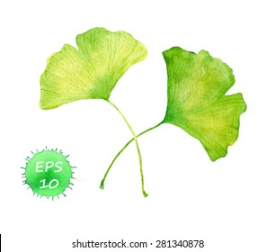 Ginkgo leaves for beauty design (spa, cosmetic ingredient). Water color vector