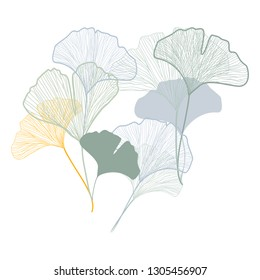 Ginkgo leaves vector isolated light blue, yellow, sage green graphics