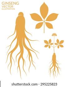 Ginseng. Vector illustration
