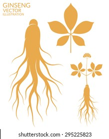 Ginseng. Vector illustration. Ginseng root and leaf on white background