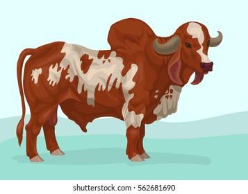 gir zebu bull breed